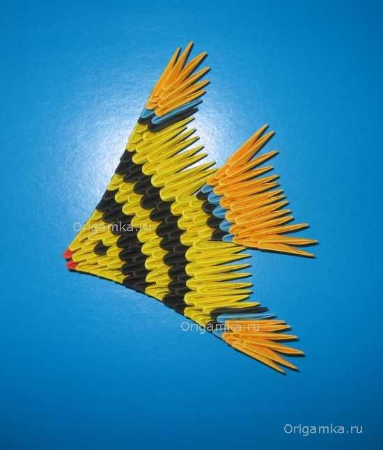 Модульное оригами рыбка состоит из 159 треугольных модуля: 2 красных, 9 синих, 31 оранжевый, 47 чёрных и 70 жёлтых.